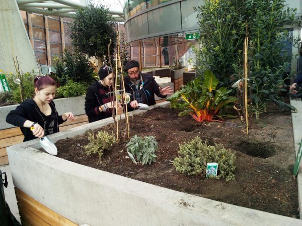 Jugendliche bepflanzen die Dächer über Graz